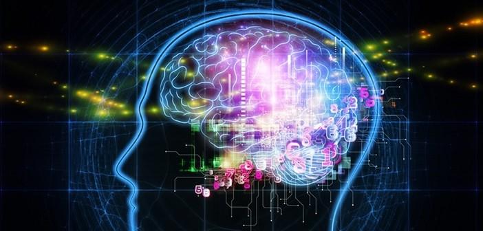 Cerveau : Mode rapide