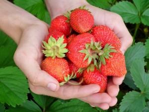 fraises AllAnd